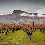 Blooming Orchards 2 Art Print