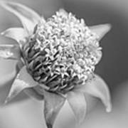 Blooming Weed Art Print