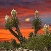 Full Blooming Yucca Art Print