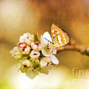 Blooms And Butterflies Art Print