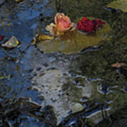 Blossom Rain 13 Art Print