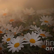 Blossom Art Print by Sylvia  Niklasson