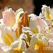 Blossom Top Art Print