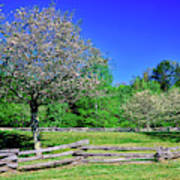 Blossom Trees In Farm, Davidson River Art Print
