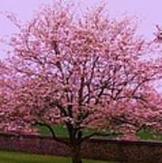 Blossoming Almond Tree  Art Print