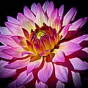 Blossoming Flower Art Print