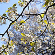 Blossoms And Leaves Art Print
