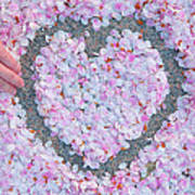 Blossoms Of Love - Cherry Blossoms 2013 - 071 Art Print