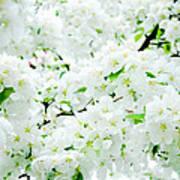 Blossoms Squared Art Print