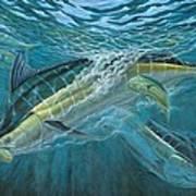 Blue And Mahi Mahi Underwater Art Print by Terry Fox