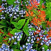 Blue And Red Flowers In Kuekenhof Flower Park-netherlands Art Print