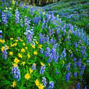 Blue And Yellow Hillside Art Print
