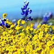 Blue And Yellow Wildflowers Art Print