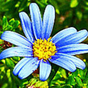 Blue Aster In Park Sierra Near Coarsegold-california   Art Print