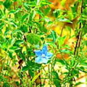 Blue Belle Art Print