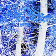 Blue Birch Trees Art Print