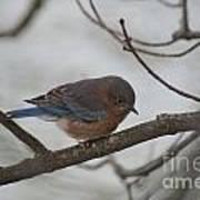 Blue Bird 201301 Art Print