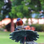 Blue Bird - I'm Looking At You Kid Art Print
