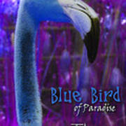 Blue Bird Of Paradise - The Fuzz Art Print