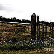 Blue Bonnet Fence V4 Art Print
