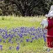Blue Bonnets Fire Hydrant V2 Art Print