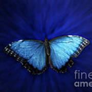 Blue Butterfly Ascending 02 Art Print
