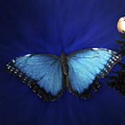 Blue Butterfly Ascending Art Print