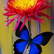 Blue Butterfly On Fire Mum Art Print