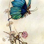 Blue Butterfly Art Print by Warwick Goble