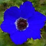 Blue Calanit Magen Art Print