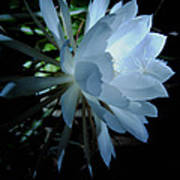 Blue Cereus Art Print