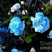 Blue Carnations Art Print