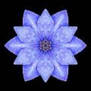 Blue Clematis Flower Mandala Art Print