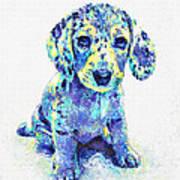 Blue Dapple Dachshund Puppy Art Print by Jane Schnetlage