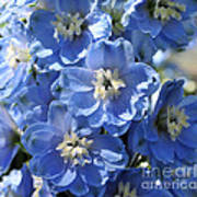 Blue Delphinium 9656 Art Print