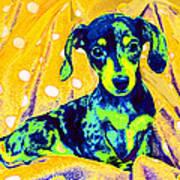 Blue Doxie Art Print