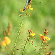 Blue Dragonfly In The Flower Garden Art Print