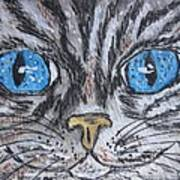 Blue Eyed Stripped Cat Art Print