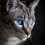 Blue Eyes Art Print