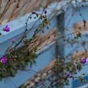 Blue Fence Purple Flowers Art Print