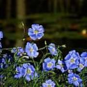 Blue Flax By The Pond Art Print