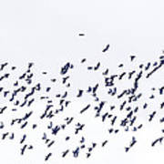 Blue Flock Of Birds Art Print