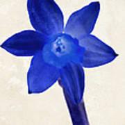 Blue Flower Beige Texture Art Print