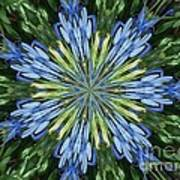 Blue Flower Star Art Print by Annette Allman