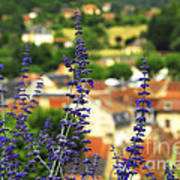 Blue Flowers And Rooftops In Sarlat Art Print by Elena Elisseeva