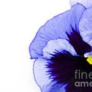 Blue Frost Art Print
