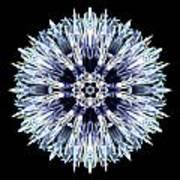 Blue Globe Thistle Flower Mandala Art Print