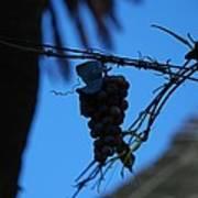 Blue Grapes Art Print