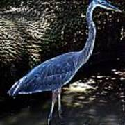 Blue Heron 8 Art Print