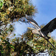Blue Heron In The Trees Oil Art Print